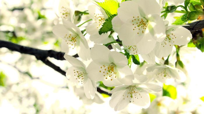 bloom, flowers, spring, leaves, branch