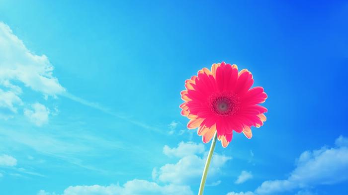 flowers, flower, summer, sky, nature
