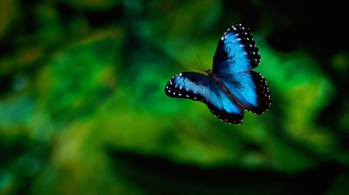 animals, background, butterfly, greenery