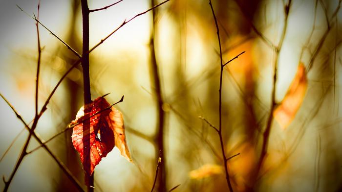 autumn, macro, leaves, motion blur, bokeh