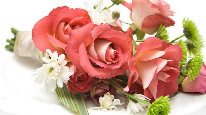 flowers, flower, stunner, roses