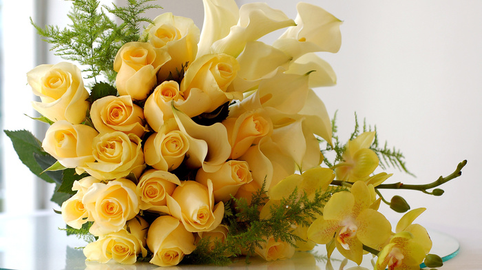 white, roses, flowers, holiday, gift, bouquet