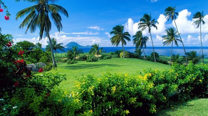 palm trees, nature, plants, glade
