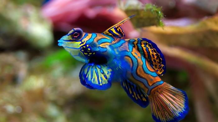 fish, animals