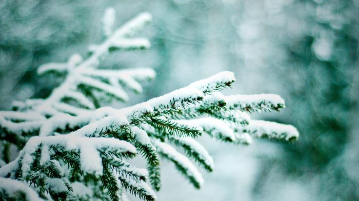 bokeh, nature, snow, twigs, Christmas tree, winter