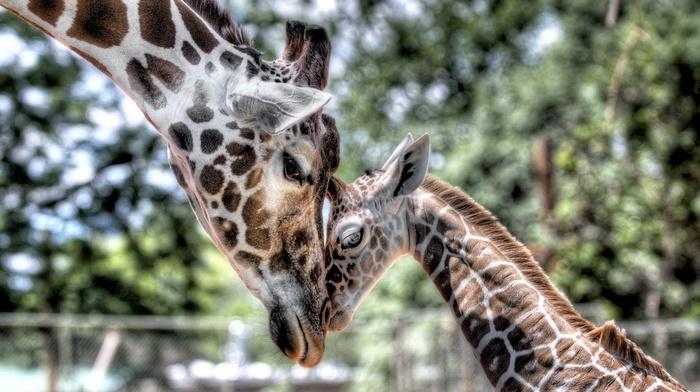 kid, animals, tenderness