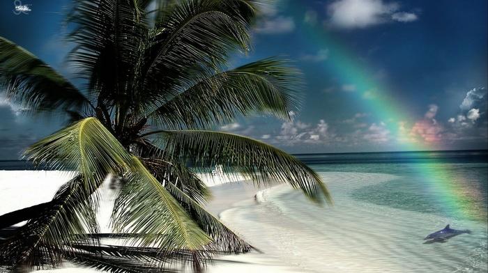 rainbow, island, nature, beach, palm trees, tropics