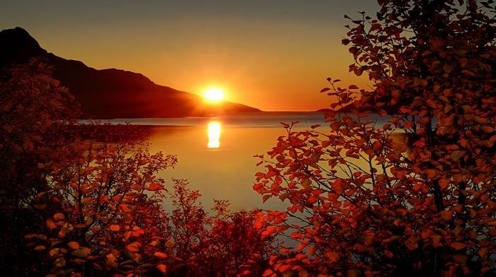 sky, mountain, sunset, twigs, rays, foliage, Sun, autumn, sea