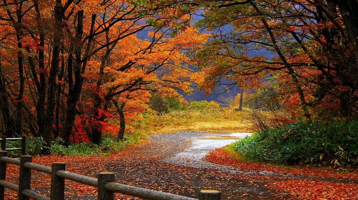 trees, autumn, leaves, road, forest, fence