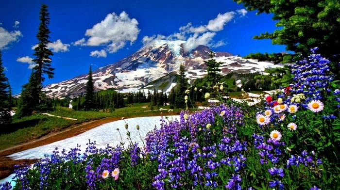 mountain, landscape, nature, snow, flowers, road
