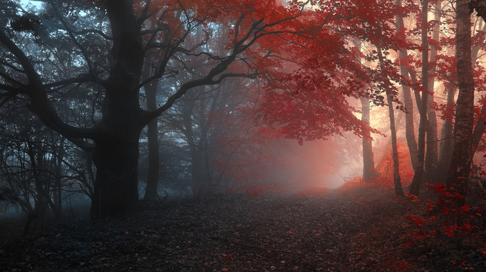 trees, mist, autumn, road, forest