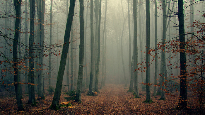 trees, autumn, twigs, nature, foliage, mist, forest
