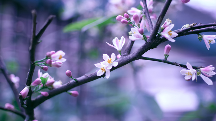 bokeh, bloom, flowers, spring, branch