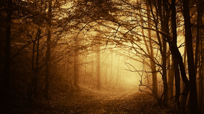 forest, twigs, mist, autumn, trees, road