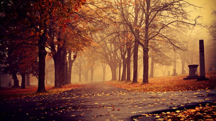 mist, cities, park, autumn, leaves, cloudy, trees