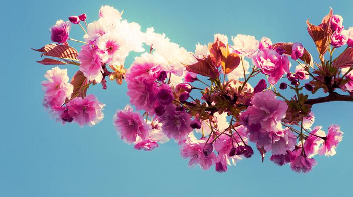 bloom, sky, spring, branch, flowers
