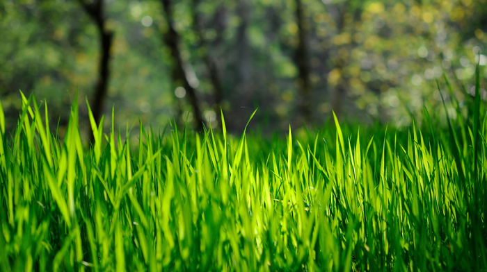grass, macro, bokeh
