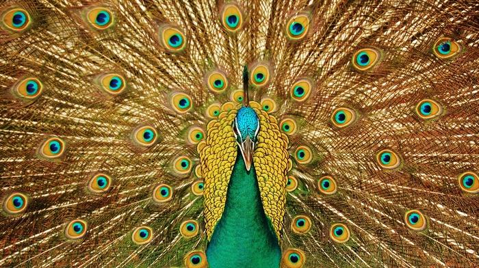 bird, feathers, tail, animals