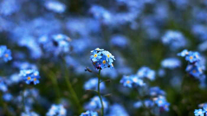blue, bokeh, yellow, colors, flowers