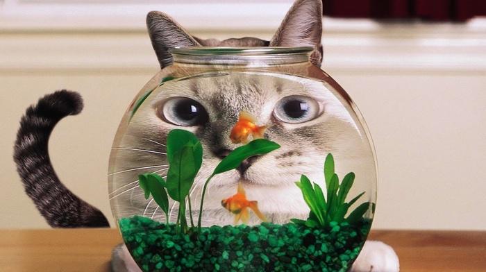 animals, fish, cat