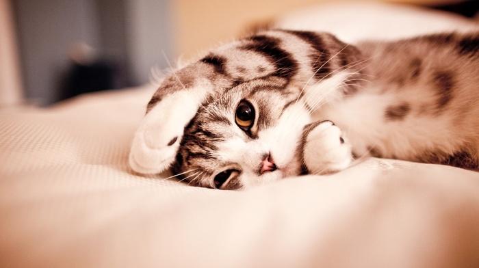 bed, kitten, animals
