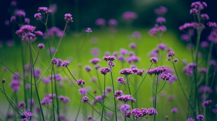 motion blur, flowers, nature, greenery, plants