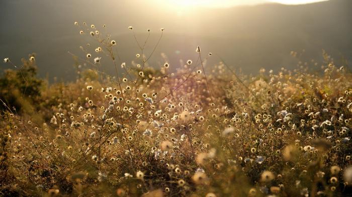 forest, glade, nature, mountain, grassland, grass