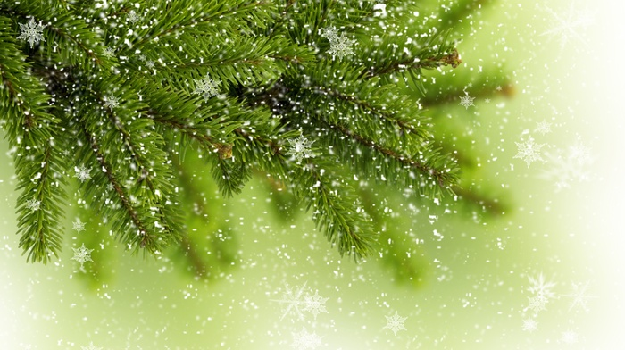 tree, fir-tree, branch, greenery, snowflakes, fir-tree, winter
