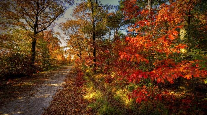 road, forest, nature, trees, sky, autumn, landscape
