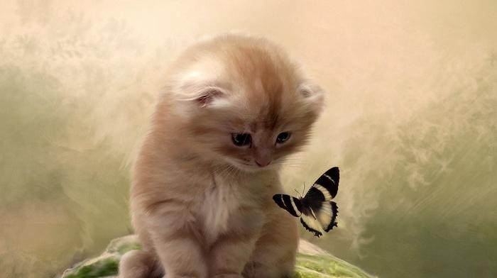 animals, background, cat, kitten, butterfly