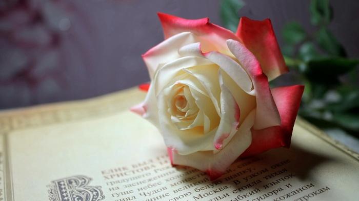 flower, rose, flowers, book