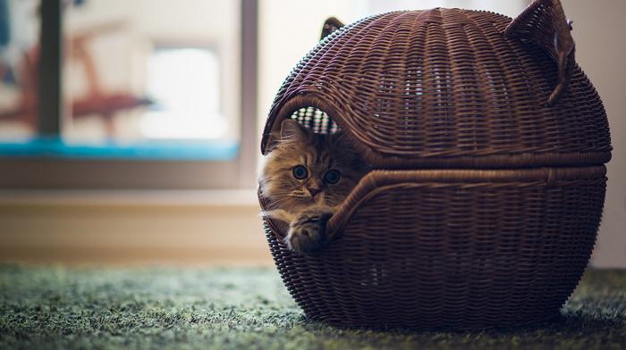animals, basket