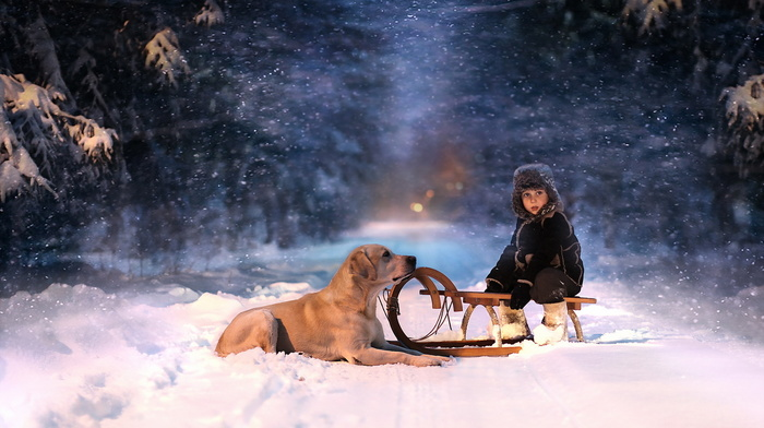 dog, winter, mood, stunner