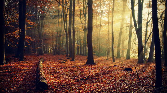 light, autumn, trees, foliage, rays, nature, twigs, forest