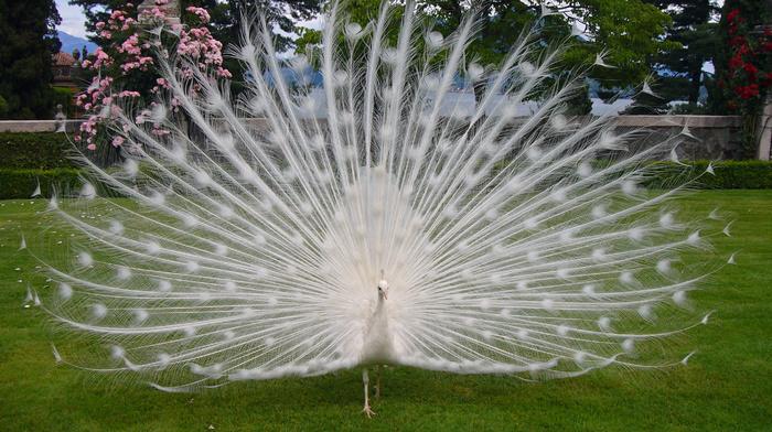 stunner, tail, bird, feathers