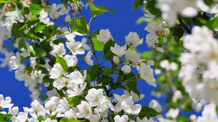 flowers, spring, nature, bloom, tree