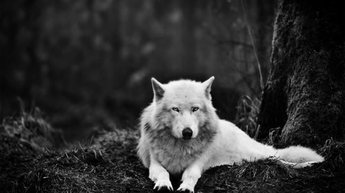 wolf, white, forest, eyes, animal, animals