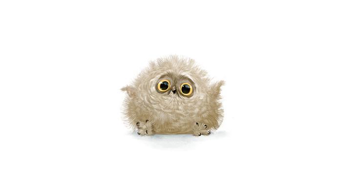 stunner, white background, sight, owl, feathers, joy