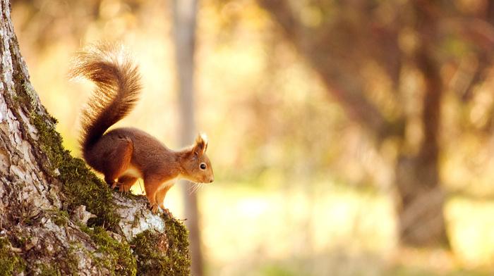 tree, squirrel, forest, moss, animals