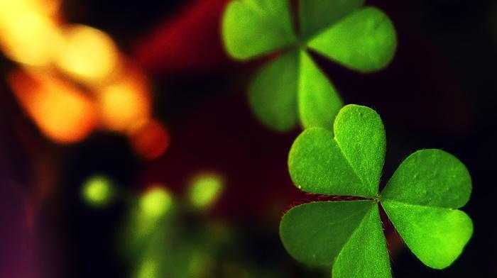 macro, greenery, leaf