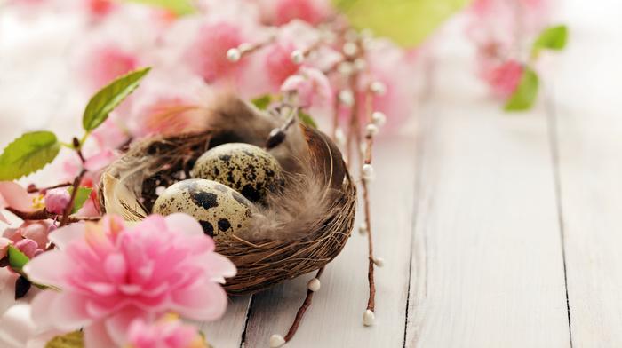 flowers, bloom, twigs