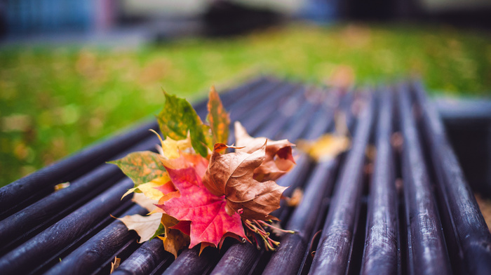 autumn, motion blur, macro, mood, leaves