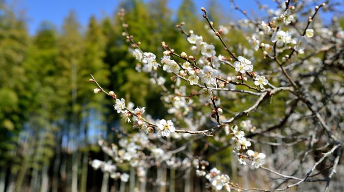 bloom, flowers, tree, spring