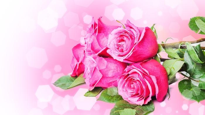 roses, petals, bouquet, flowers
