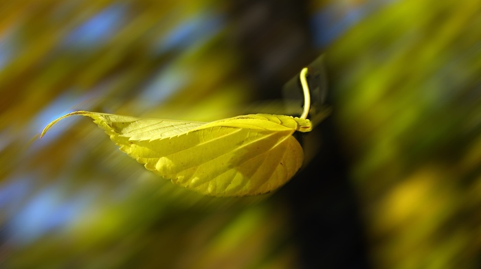 leaf, autumn