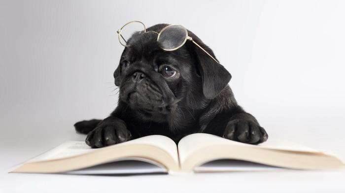 glasses, animals, book, dog