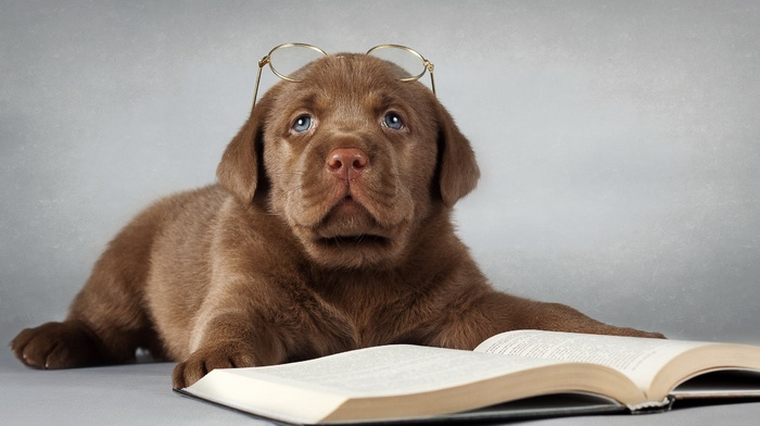 animals, glasses, book