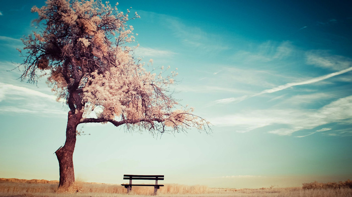 tree, summer, stunner, bench, clouds, sky, mood, horizon
