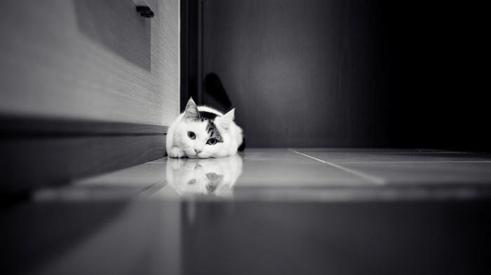 black and white, door, animals, cat