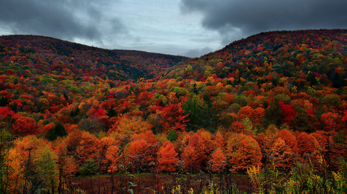 forest, autumn, sky, cloudy, mountain, trees